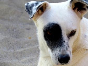 Portraits-beach-day-Dog3