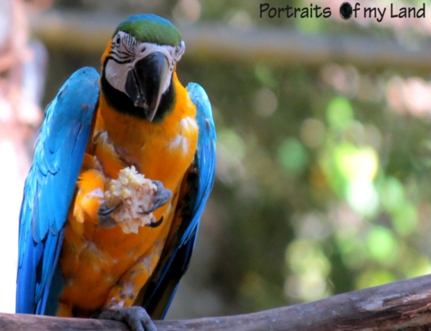 Portraits-summit-park-Guacamaya