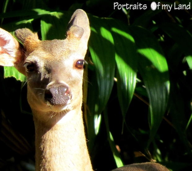 Portraits-summit-park-Venado