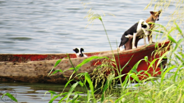 Portraits-of-my-land-dogs-on-a-boat