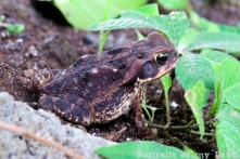 Portraits-of-my-Land-frog-family-2