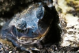 Portraits-of-my-Land-frog-family-4
