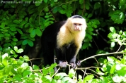 Portraits-of-my-Land-Lonely-Monkey