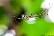 Portraits-of-my-Land-Spiders-4