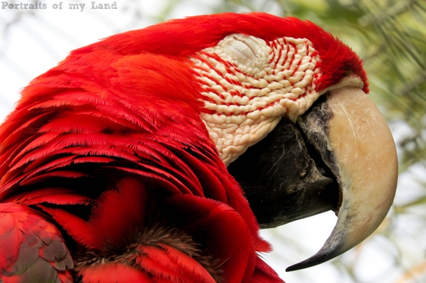 Portraits-of-my-Life-Red-Macaw-3