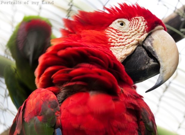 Portraits-of-my-Life-Red-Macaw-9