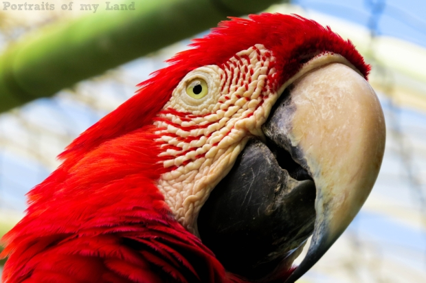 Portraits-of-my-Life-Red-Macaw