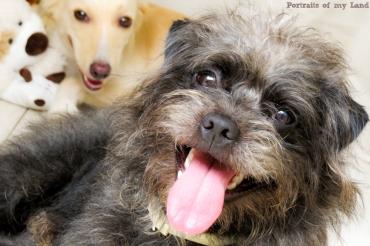 Portraits-of-my-Land-Pets-photoshoot-11
