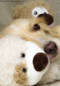 Portraits-of-my-Land-Pets-photoshoot-12