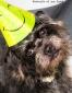 Portraits-of-my-Land-Pets-photoshoot-5