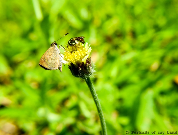Portraits-of-my-Land-Nectar-of-flower-2
