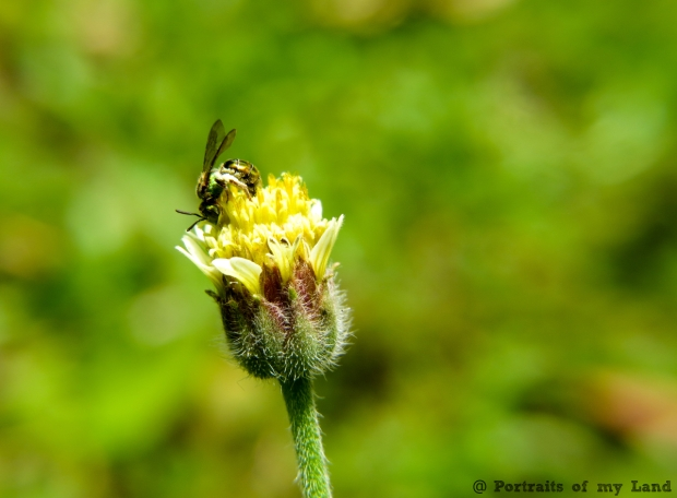 Portraits-of-my-Land-Nectar-of-flower-5