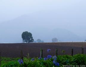 Earth-Day-Portraits-of-my-Land-Panama