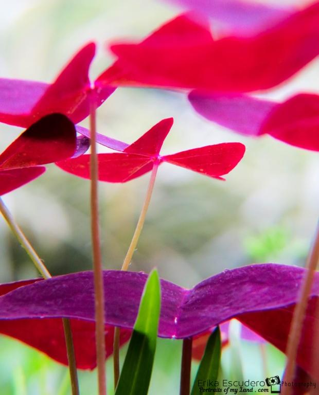 ErikaE-Portraits-Colorful-Flowers-4