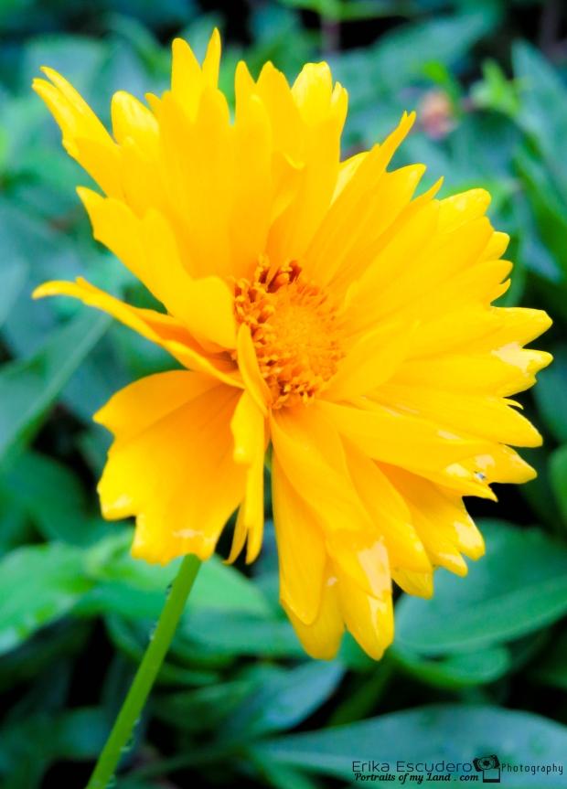ErikaE-Portraits-Colorful-Flowers-6