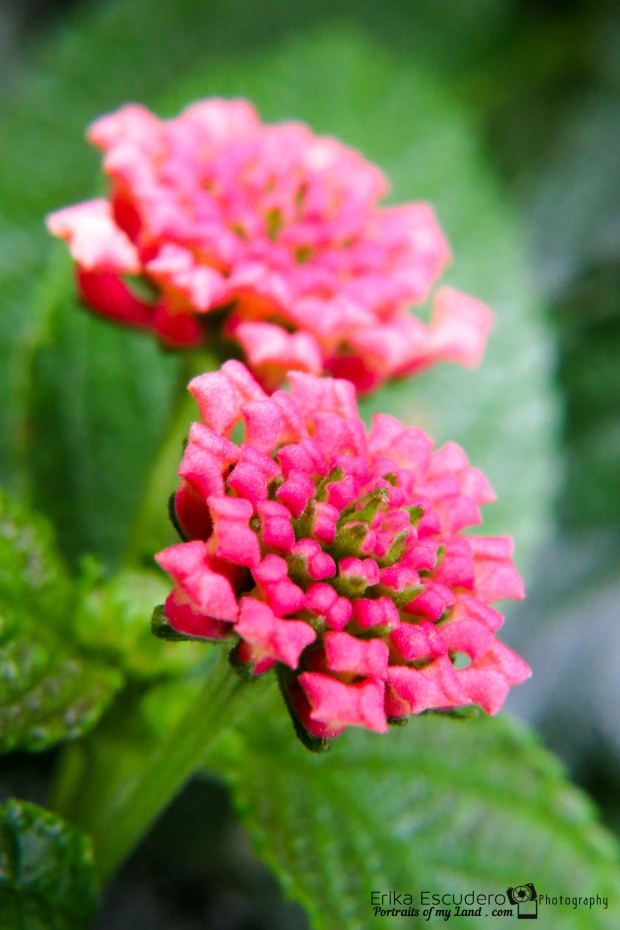 ErikaE-Portraits-Colorful-Flowers-7
