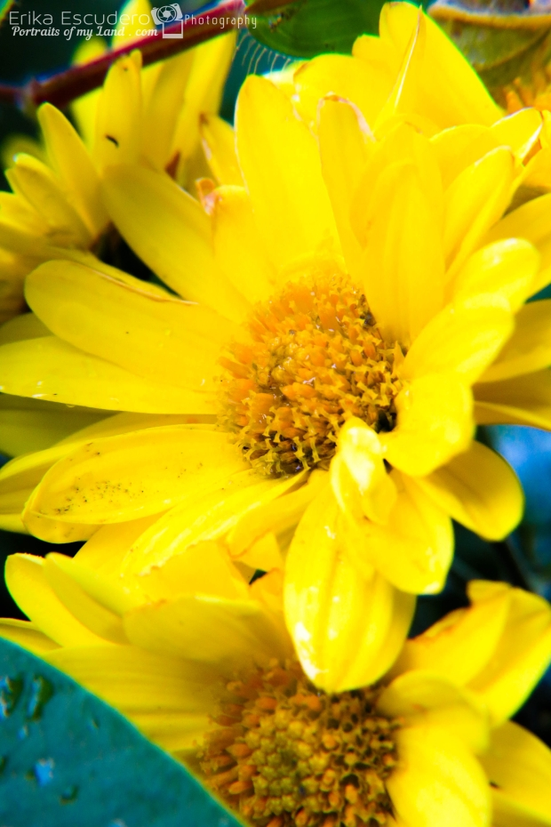 ErikaE-Portraits-Colorful-Flowers-9