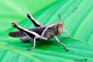 ErikaE-Portraits-cute-Insects-1
