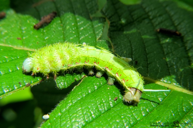 ErikaE-Portraits-cute-Insects-4