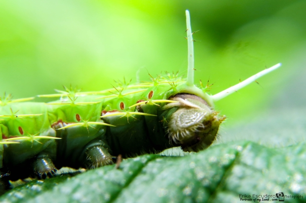 ErikaE-Portraits-cute-Insects-5