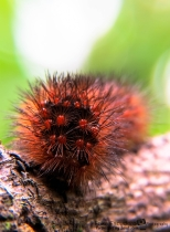 ErikaE-Portraits-cute-Insects-8