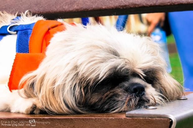 ErikaE-Portraits-Dog-Friend-15