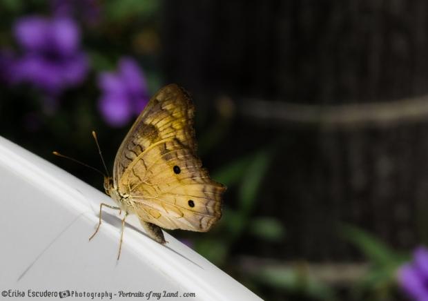 """<img scr=""""URL de la imagen"""" alt=""""butterfly at rest""""/>"""