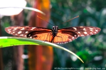 Butterfly-posing-Portraits-of-my-Land.com