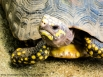 Turtle-Patterns-Portraits-of-my-Land