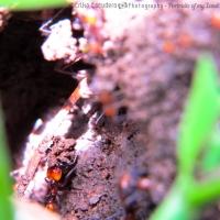 Hormigas trabajadoras / Working ants