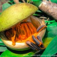 Fruta silvestre / Wild fruit