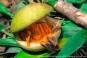 Wild-Fruit-Portraits-of-my-Land.com